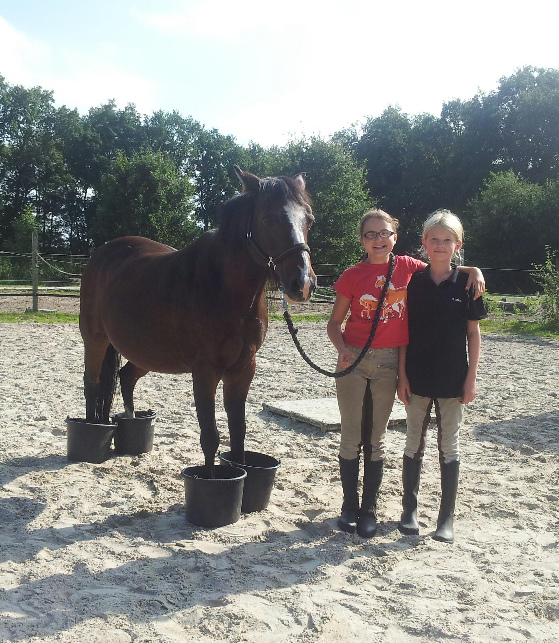 Reitercamp und pferdekunde i 2014 eva skrzypczinski for Exterieur beurteilung pferd